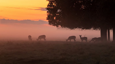 Deer, tree, fog, forest, nature dawn+ Download Wallpapers