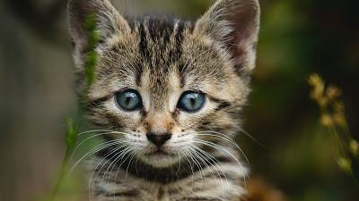 Cute Wallpaper, Pet, Kitten, Cat, Striped, Garden+ Download Wallpapers