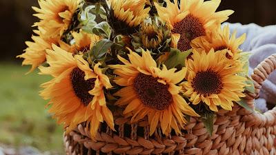 Sunflower Wallpaper, Flowers, Basket, Bouquet+ Download Wallpapers