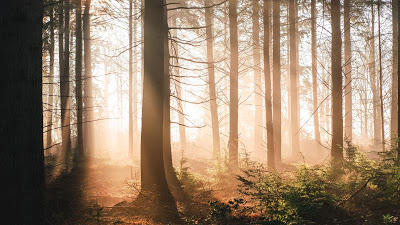 Morning Sunrise Forest Wallpaper+ Download Wallpapers