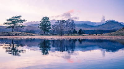 Wallpaper free trees, lake, reflection, landscape+ Download Wallpapers