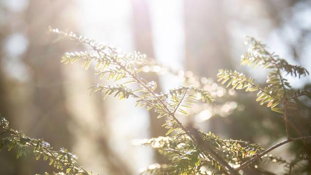 Sunligh, Branchs, Leaves, Macro wallpaper+ Download Wallpapers