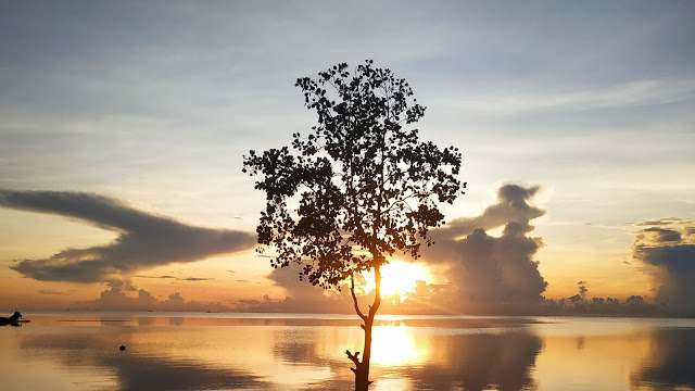 Lonely tree, Lake, Sunset.  Wallpaper clouds, reflection+ Download Wallpapers
