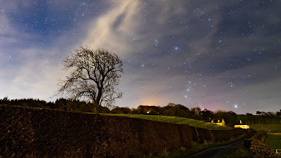 Free Nature Wallpaper Starry Night Sky, Tree, Landscape+ Download Wallpapers