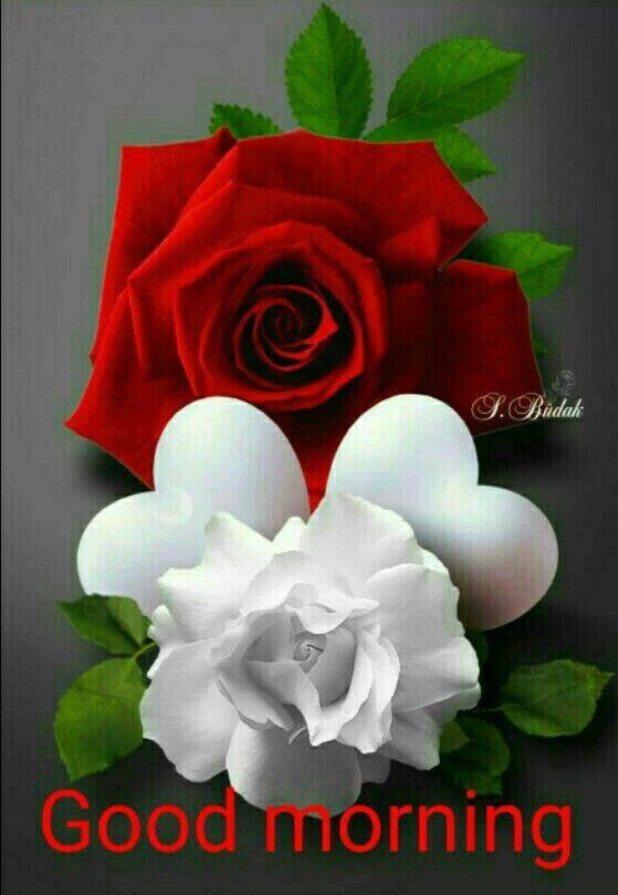 Love Flower Wallpaper Good morning– HD HQ Wallpapers Download