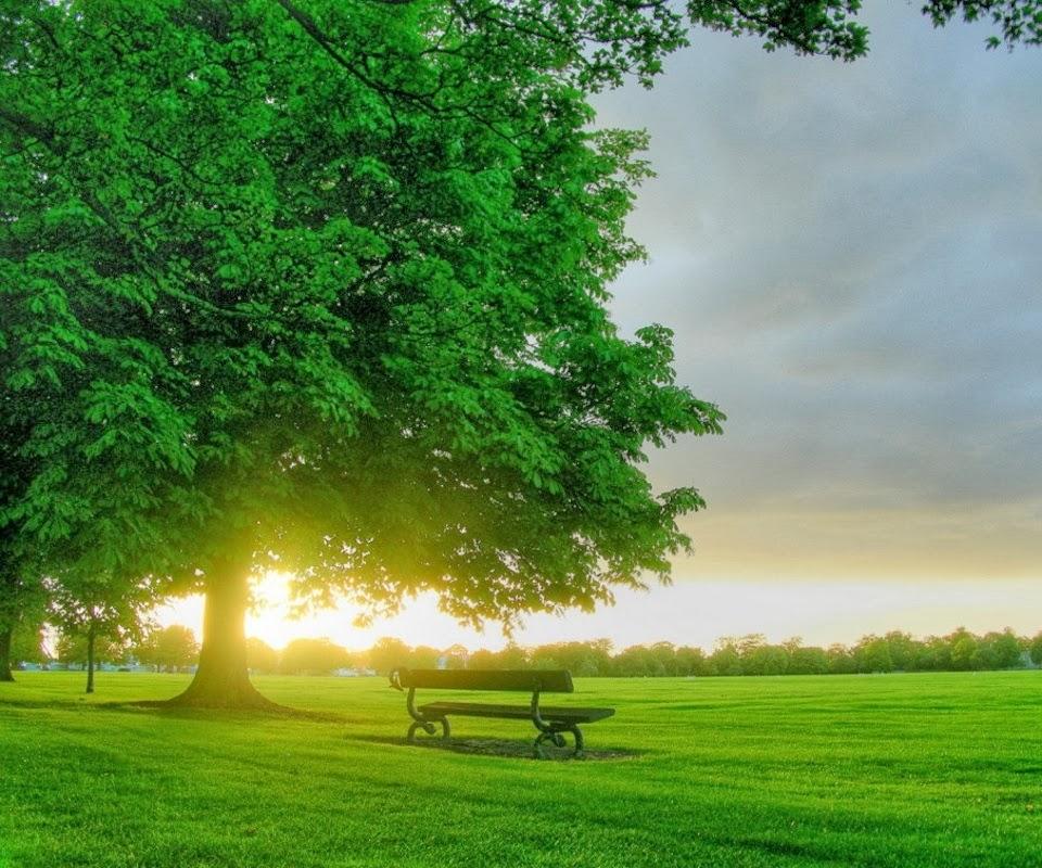 Best breakfast wallpapers  Beautiful nature scenes– HD Image Download