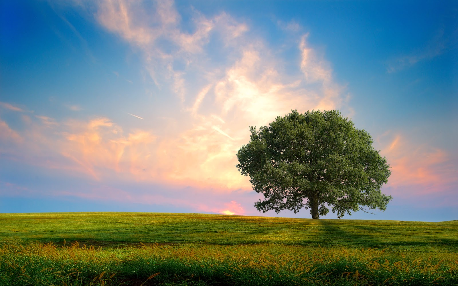 Green wallpapers  Natural green  Green & beautiful nature– Download