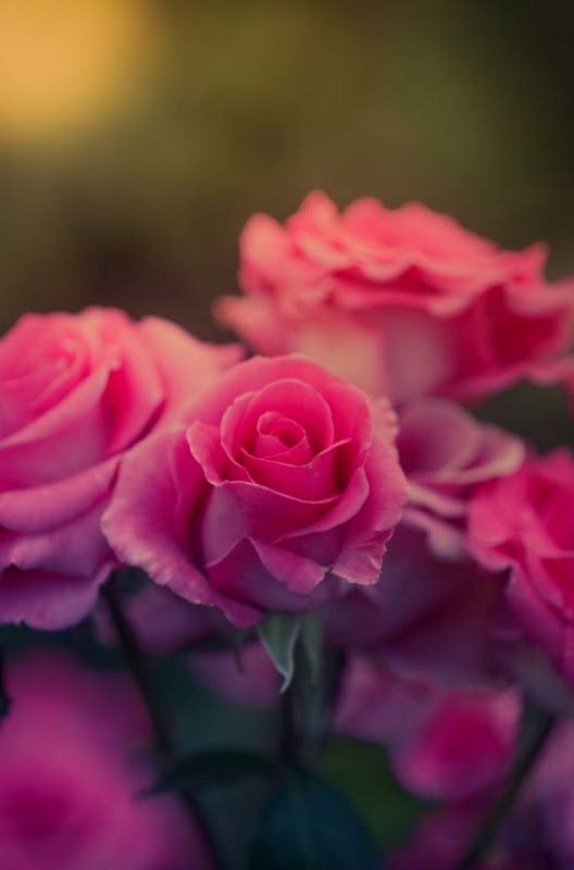 Flower wallpaper of nature– HD HQ Wallpapers Download