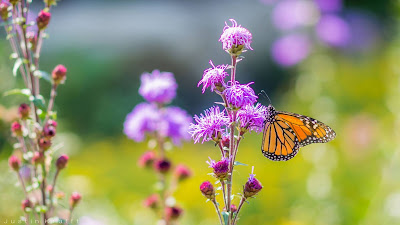 Wallpaper Spring Butterfly magical nature+ Download Wallpapers