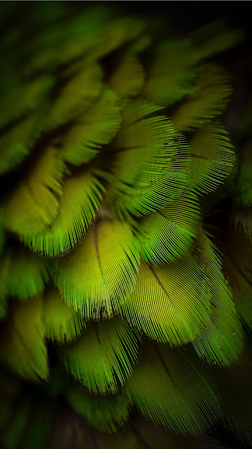 Green parrot feather iphone wallpaper+ Wallpapers Download