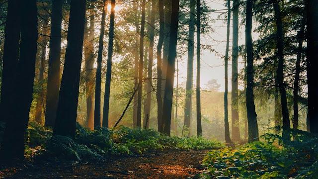 IPhone and Desktop Wallpaper Sunlight Forest+ Wallpapers Download