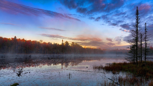Swamp, fog, twilight wallpaper+ Wallpapers Download