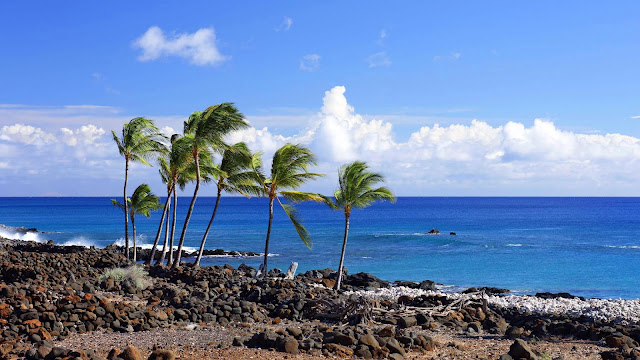 Wallpaper palm trees, sea, beach+ Wallpapers Download