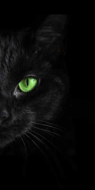 Black Cat Green Eye Iphone Wallpaper+ Wallpapers Download