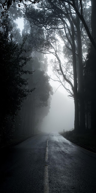 Wallpaper for iPhone Dark Forest Road at night+ Wallpapers Download