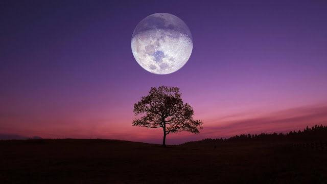 Lonely Tree Wallpaper, Sunset, Moon, Night+ Wallpapers Download