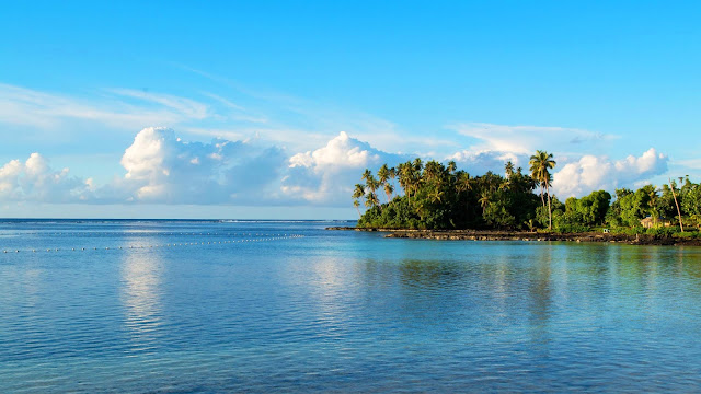 Island, palm trees, sea wallpaper+ Wallpapers Download