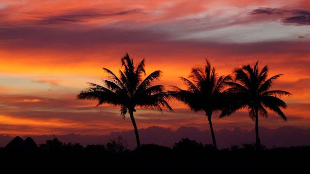 Tropical sunset, palm trees, summer wallpaper+ Wallpapers Download