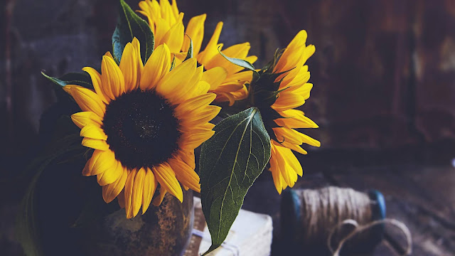 Sunflowers Vintage Aesthetic Wallpaper+ Wallpapers Download