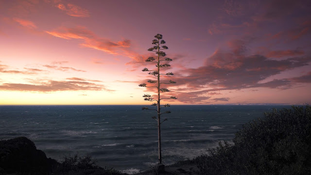 Lonely tree, sea, sunset, landscape wallpaper+ Wallpapers Download